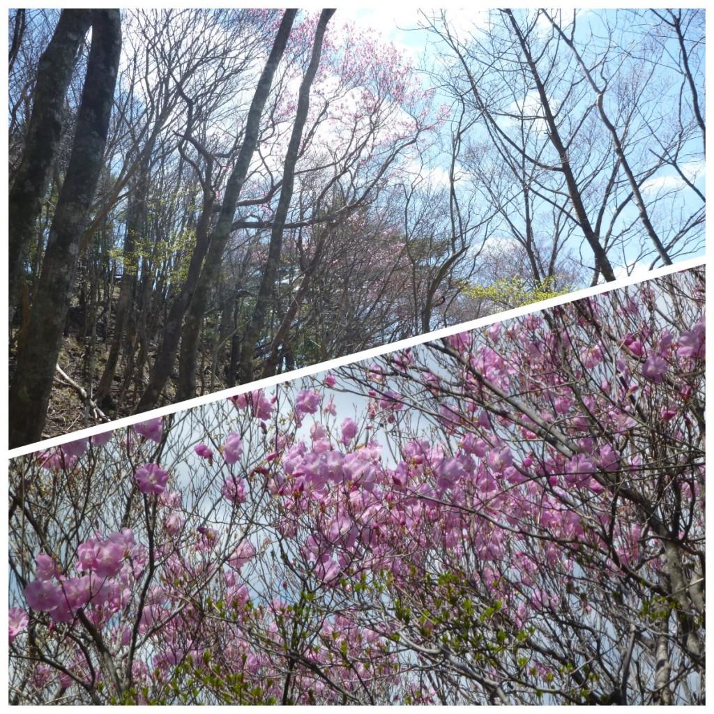 Photo_20-03-27-13-27-53.943